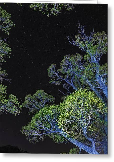 Stars Out Tonight Greeting Card by Nancy Marie Ricketts