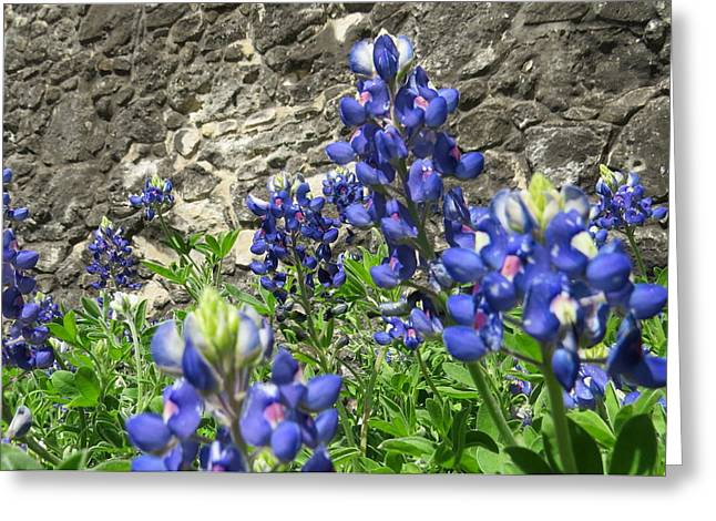 Greeting Card featuring the photograph State Flower Of Texas - Bluebonnets by Ella Kaye Dickey