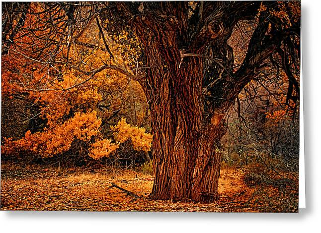 Stately Oak Greeting Card by Priscilla Burgers