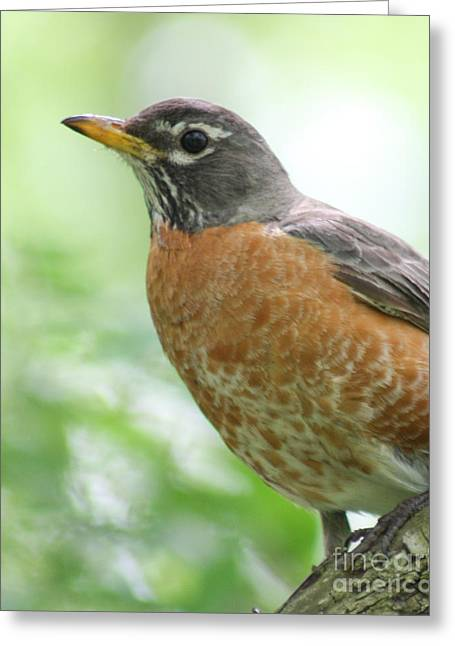 Greeting Card featuring the photograph Stately Robin by Anita Oakley