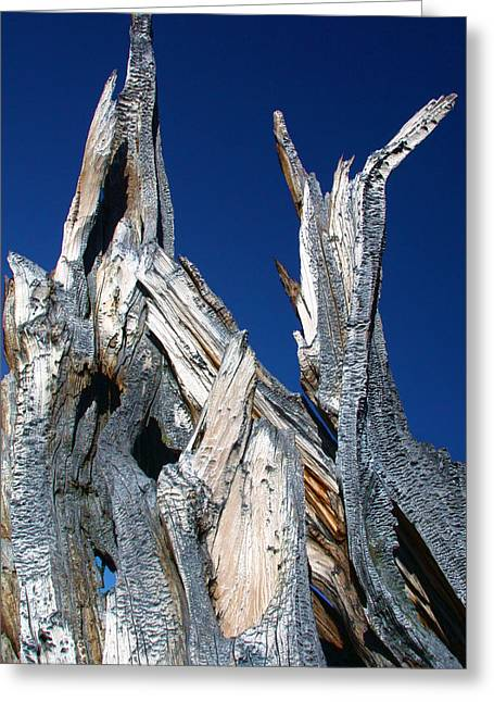 Steeple Roots Greeting Card