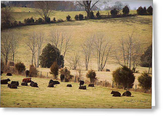 Steers In Rolling Pastures - Kentucky Greeting Card by Paulette B Wright