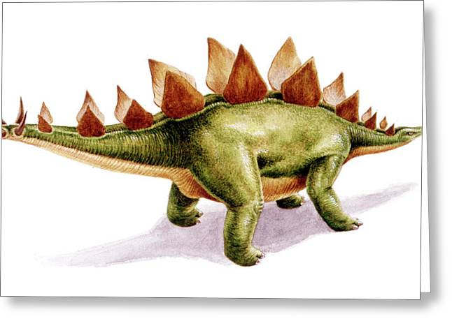 Stegosaurus Dinosaur Greeting Card by Deagostini/uig