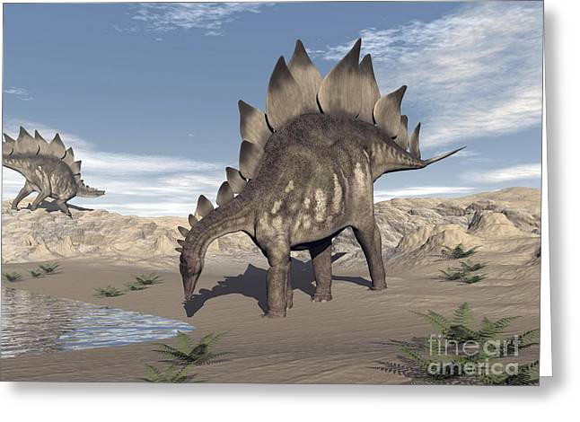 Stegosaurus Dinosaur Drinking Water Greeting Card