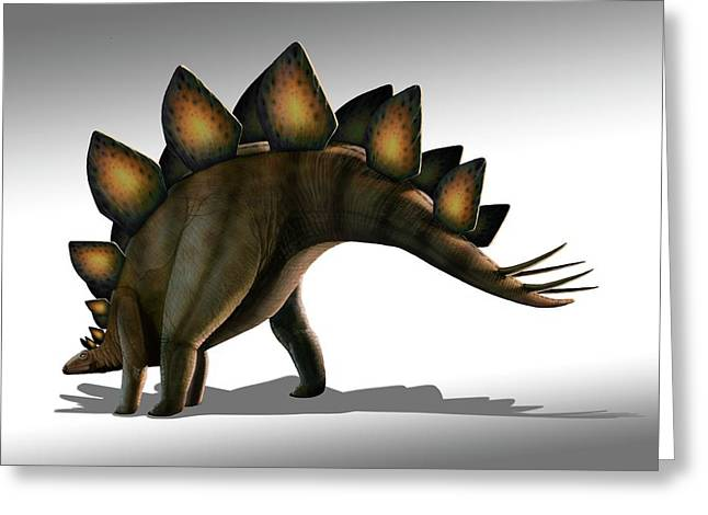 Stegosaurus Dinosaur Greeting Card by Mark Garlick