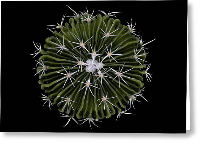 Stenocactus Greeting Card by Victor Mozqueda