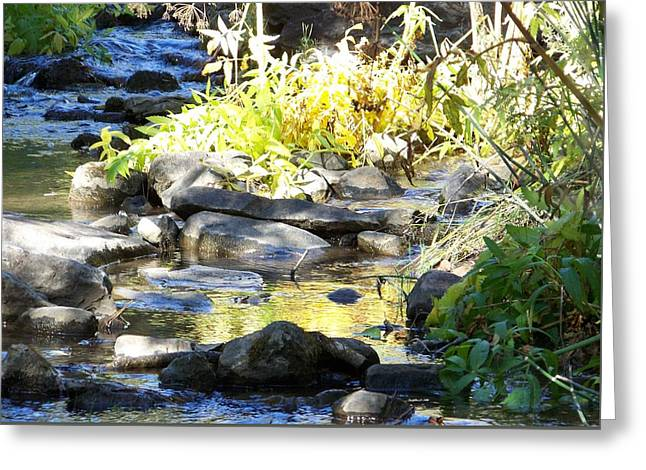Stepping Stones Greeting Card by Sheri Keith