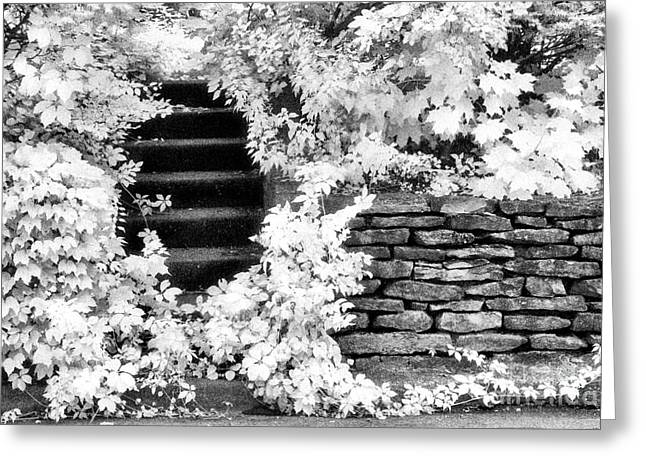 Steps And Stones Greeting Card by Jeff Holbrook