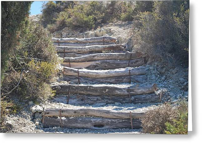 Steps In The Woods Greeting Card by George Katechis