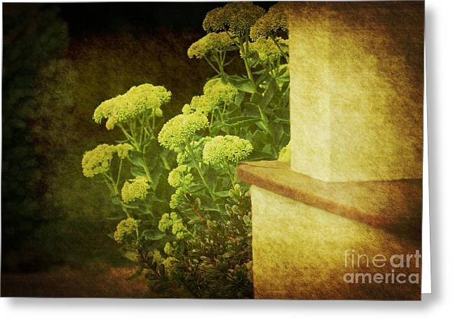 Greeting Card featuring the photograph Steps by Rosemary Aubut