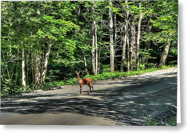 Sterling Valley Doe Greeting Card by John Nielsen