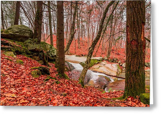 Stickney Brook 2 Greeting Card
