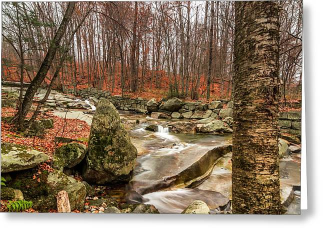 Stickney Brook 3 Greeting Card