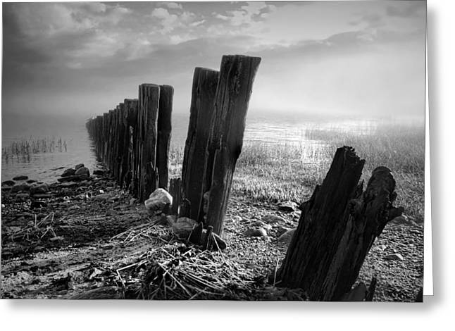 Sticks And Stones Greeting Card by Diana Angstadt