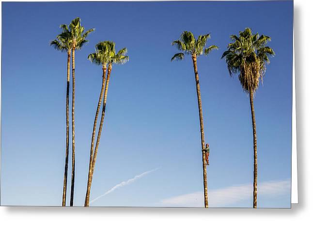Sticky Palms Greeting Card by Shukis Lockwood