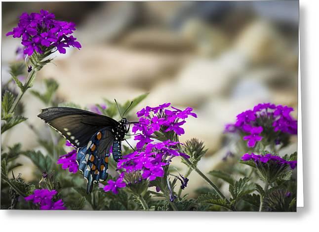 Still Beautiful Swallowtail Greeting Card