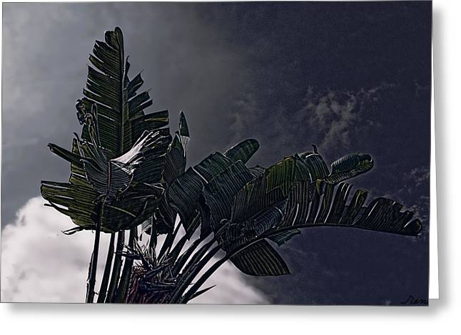 Greeting Card featuring the photograph Banana Tree -still In A Storm #3  by Renee Anderson