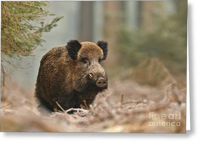 Still Life Boar Greeting Card by Neil Burton