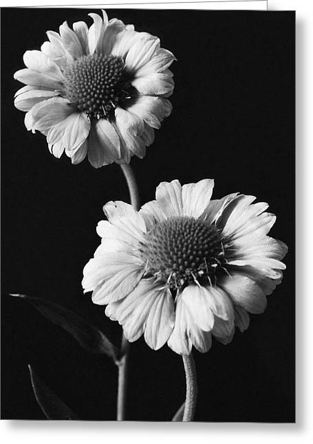 Still Life Of Flowers Greeting Card by J. Horace McFarland