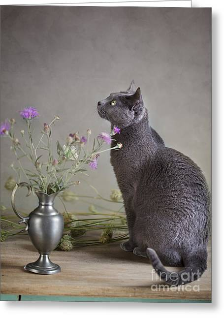 Still Life With Cat Greeting Card by Nailia Schwarz