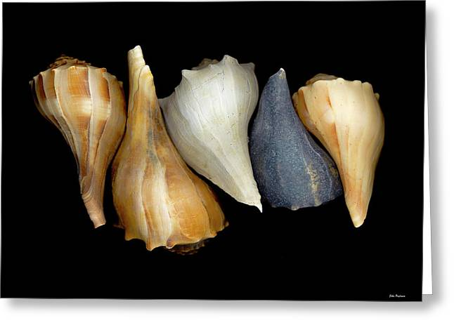 Still Life With Five Whelk Shells Greeting Card by John Pagliuca