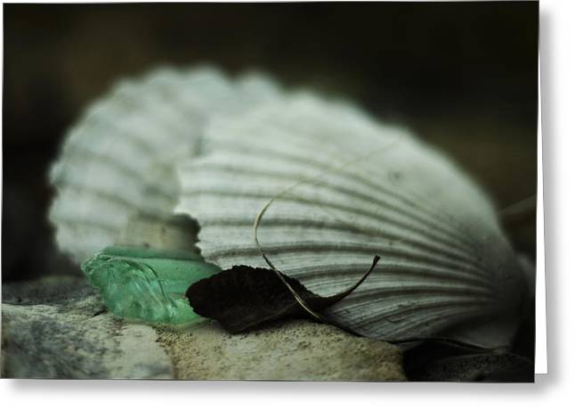 Still Life With Fossil Shells And Beach Glass Greeting Card by Rebecca Sherman