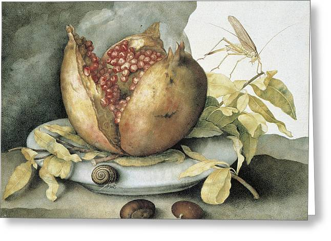 Still Life With Open Pomegranate Greeting Card