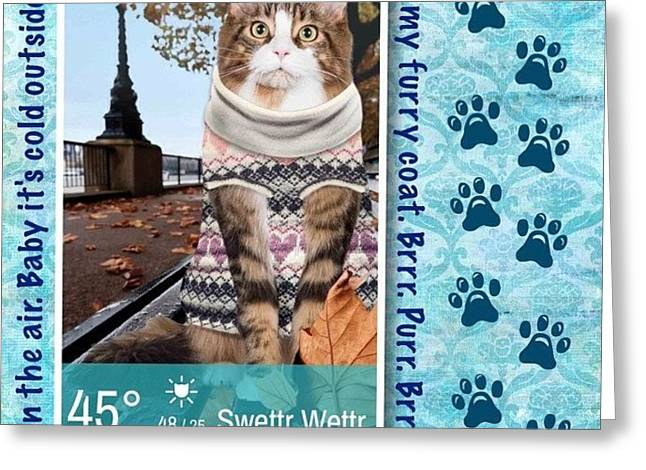 Still Loving This #weatherwhiskers #app Greeting Card