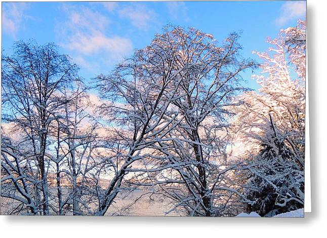 Still Of Winter Greeting Card