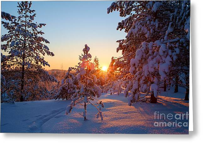 Still Standing In The Winter Sunset Greeting Card