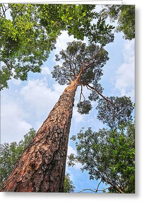 Still Standing Tall - Pine Tree Greeting Card