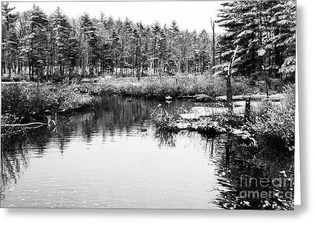 Still Waters Greeting Card by Sue OConnor
