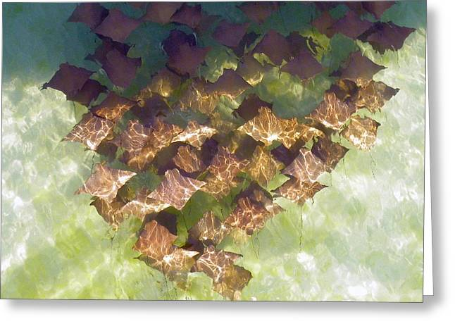 Greeting Card featuring the photograph Stingrays At Navarre Beach In Florida by Teresa Schomig