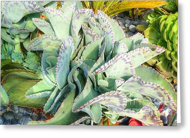 Stippled Cactus Greeting Card by Deborah Smolinske