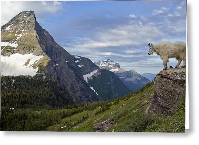 Stoic Mountain Goat Greeting Card