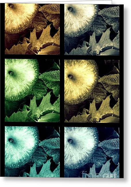 Stone Apples Greeting Card by France Laliberte