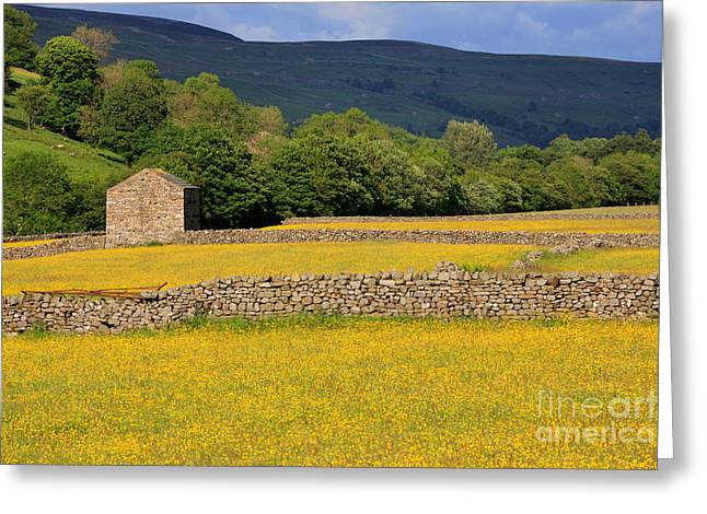 Stone Barn And Dry Stone Walls In Swaledale In The Yorkshire Dales Greeting Card by Louise Heusinkveld