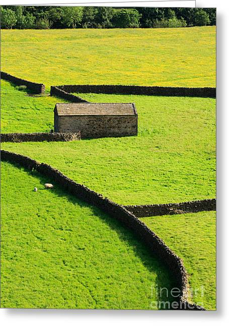 Stone Barn And Dry Stone Walls In Swaledale Yorkshire Dales Greeting Card by Louise Heusinkveld