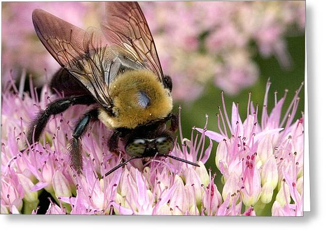 Stone Mountain Bumble Bee Greeting Card by Gene Walls
