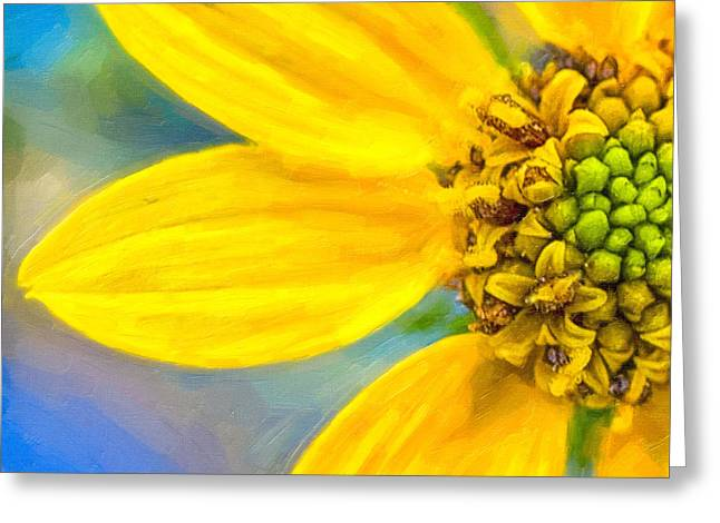 Stone Mountain Yellow Daisy Details - North Georgia Flowers Greeting Card by Mark E Tisdale
