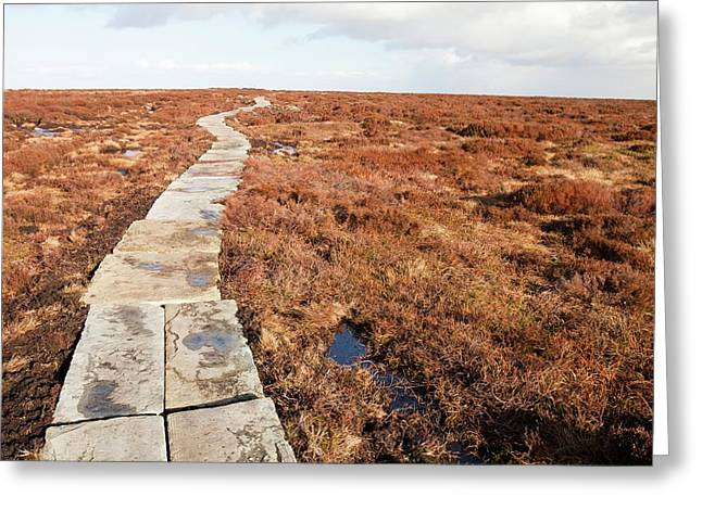 Stone Path Over Peatland Greeting Card by Ashley Cooper