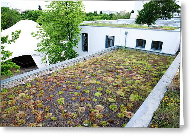 Stonecrop-planted Green Roof Greeting Card by Louise Murray