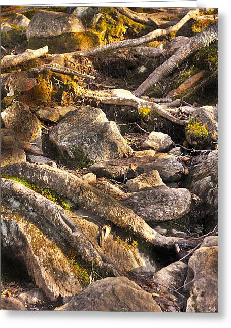 Stones And Roots Greeting Card by Alex Wrenn