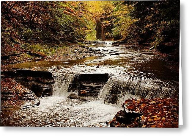 Stony Brook Gorge Greeting Card by Justin Connor