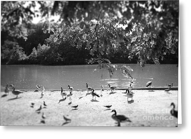 Greeting Card featuring the photograph Stony Brook Pond by Paul Cammarata