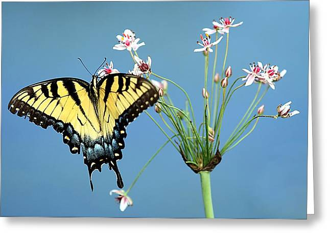 Stop And Smell The Flowers Greeting Card by Elizabeth Winter