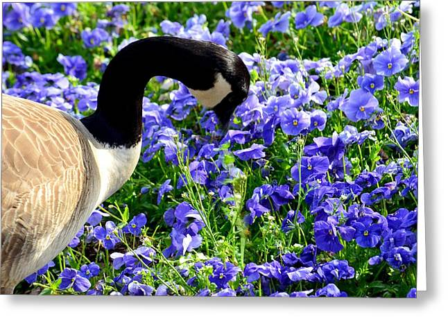 Stop And Smell The Flowers Greeting Card by Maria Urso