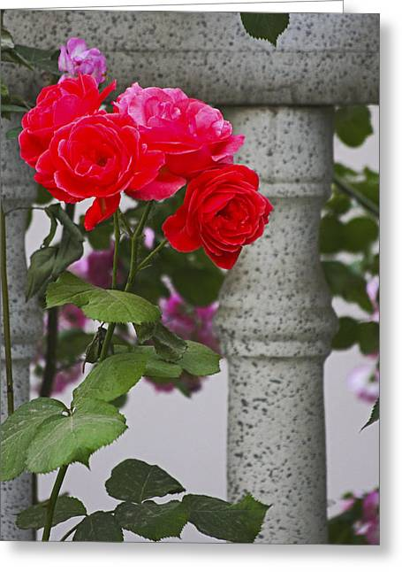 Stop And Smell The Roses Greeting Card by Yun Qing Fu