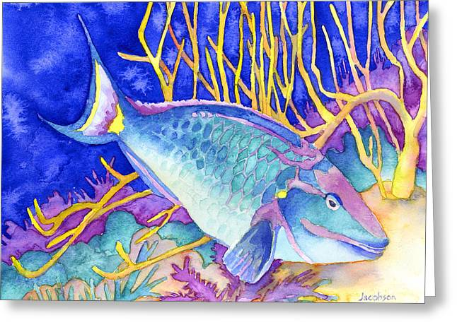 Stoplight Parrotfish Greeting Card