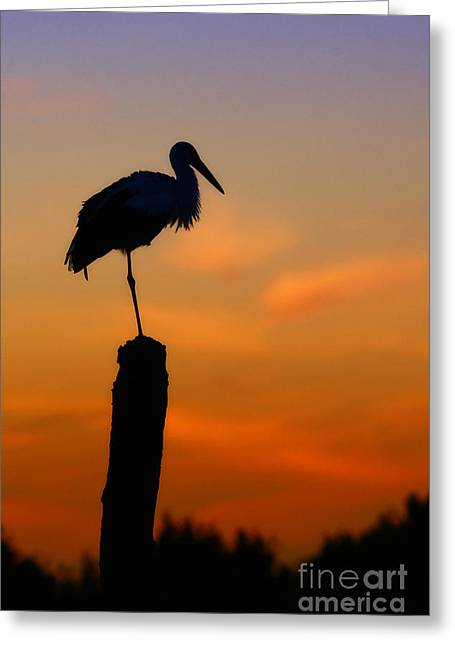 Storck In Silhouette High On A Pole Greeting Card